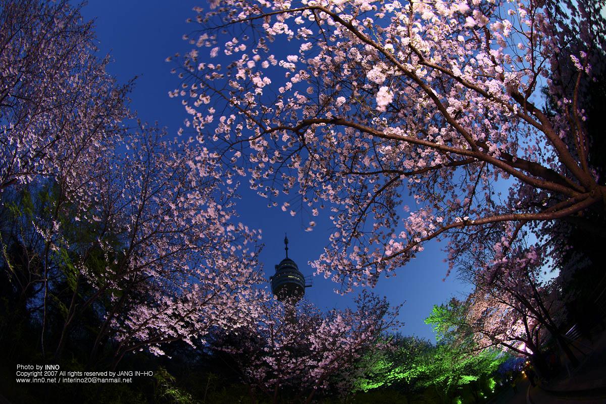두류벚꽃1.jpg