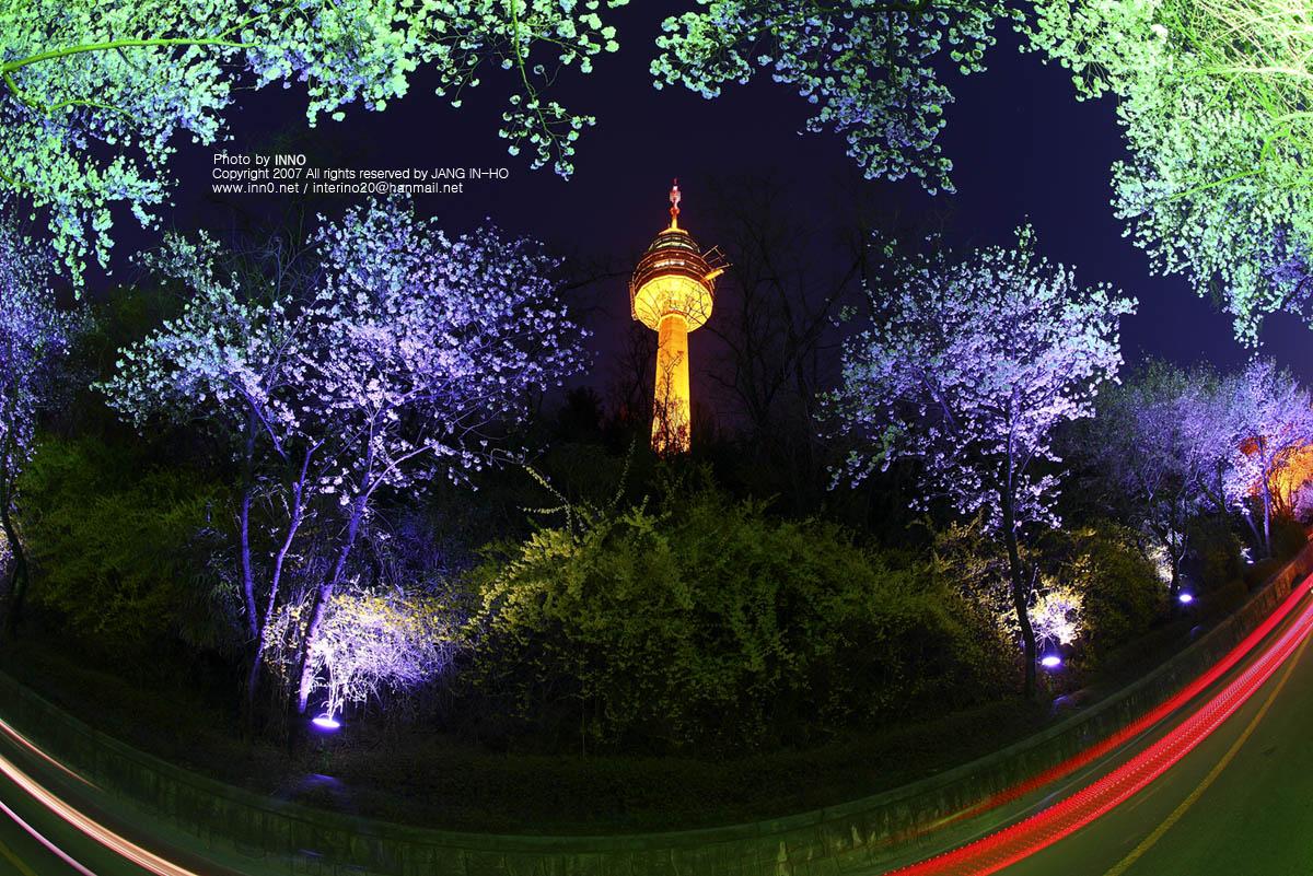 두류벚꽃2.jpg